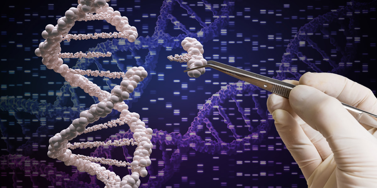 a look a the future of dna science in the human species The legacy we leave to our future in tomorrow's issue of the journal science genetics suggest that the human species had 12 dna.
