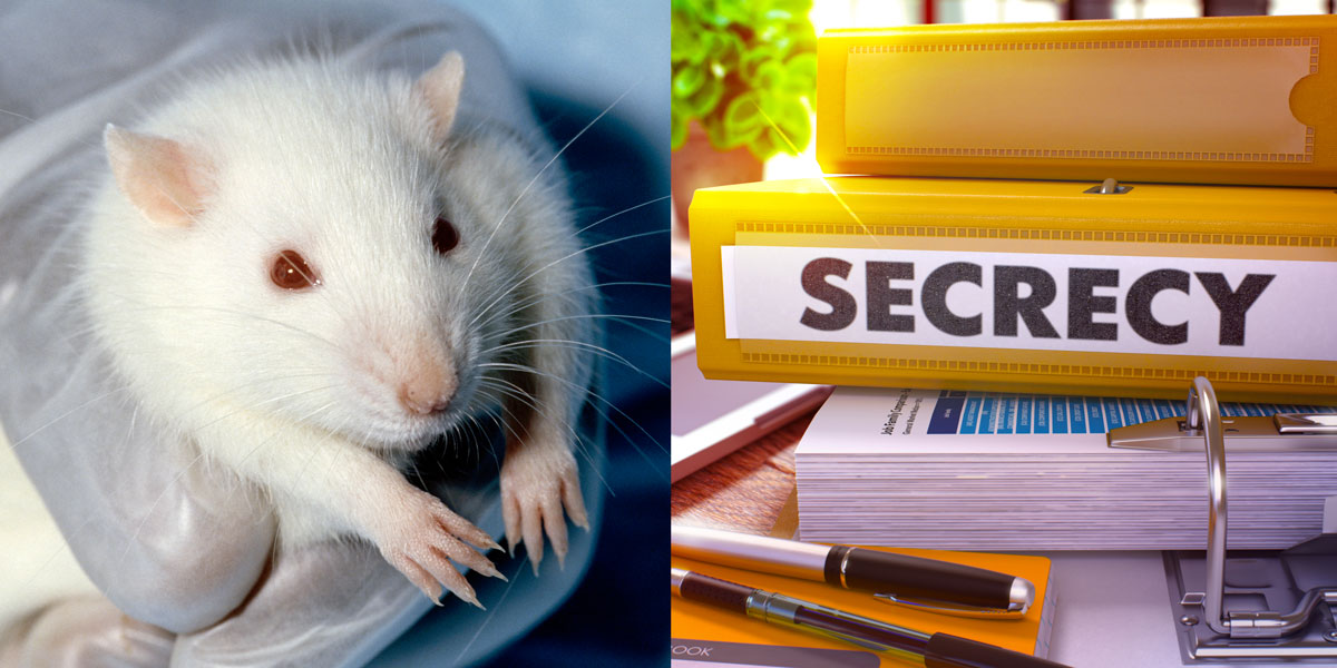 Lab Rat and Secret Toxicity Studies