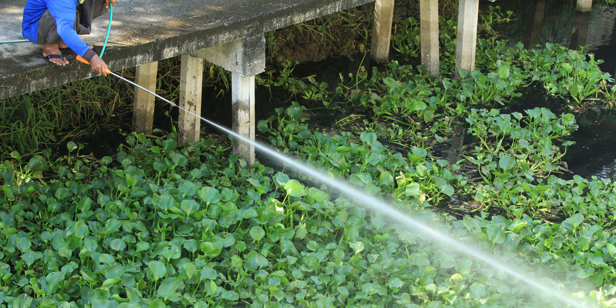 Man Spraying Herbicide from bridge