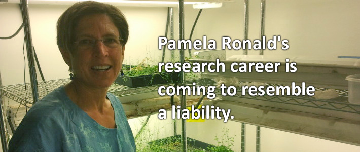 Pamela Ronald research career now a liability