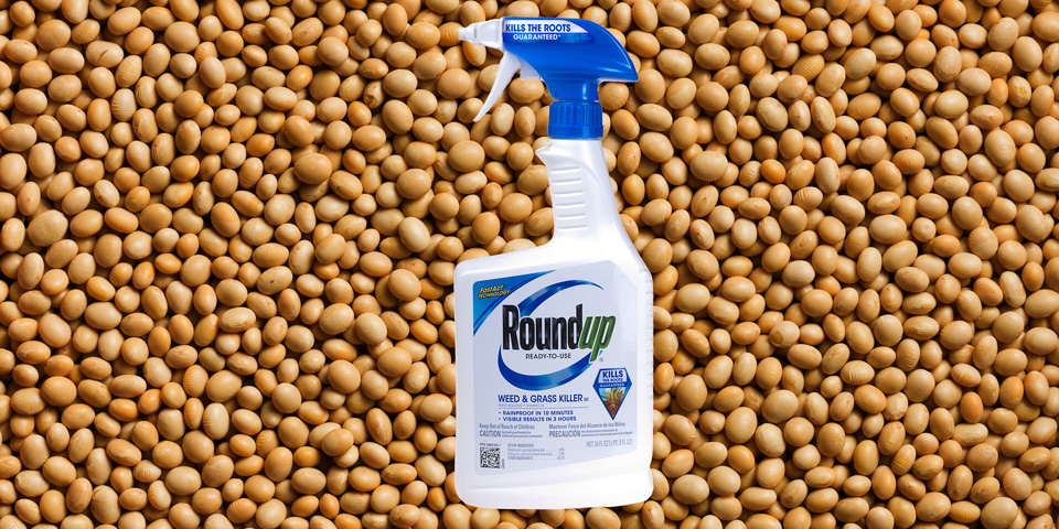 Roundup dispenser and soya beans