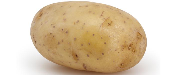 Unwanted GM Potato