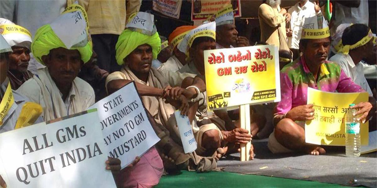 GMO Mustard farmer protest in India