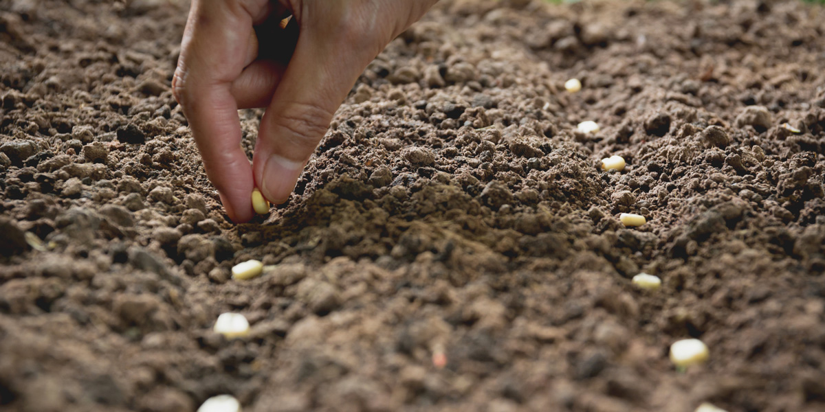 sowing seeds by hand