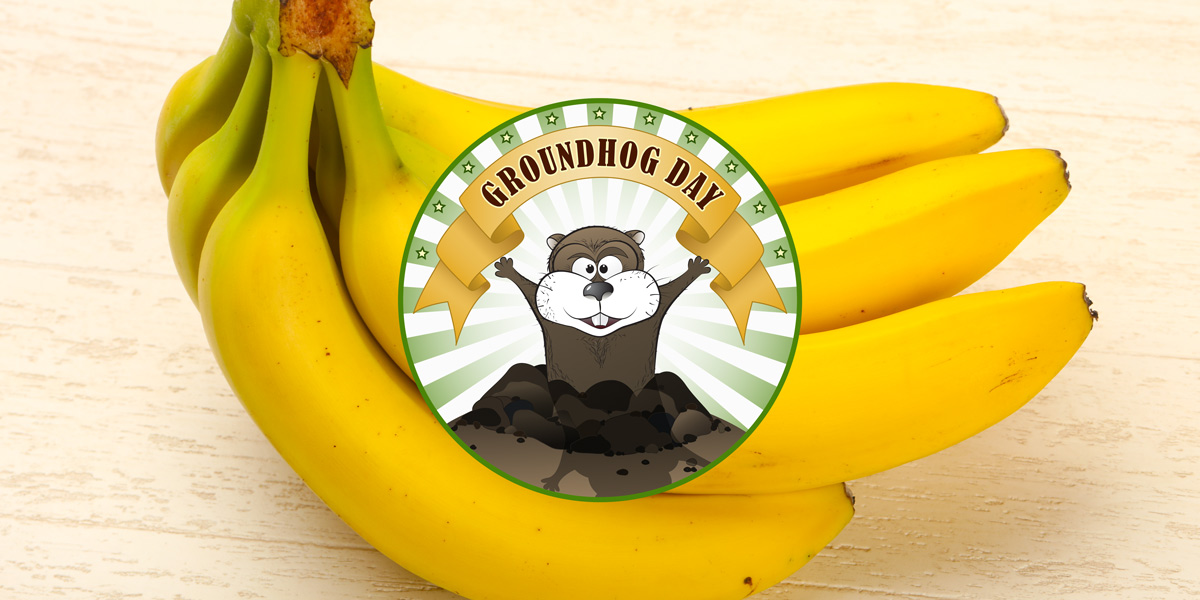 Bunch of bananas - groundhog day