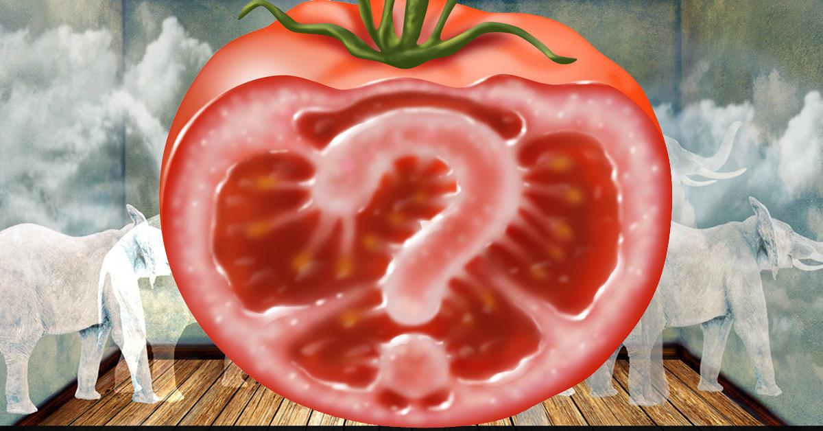 Dodgy Gene Edited Tomato and white elephants