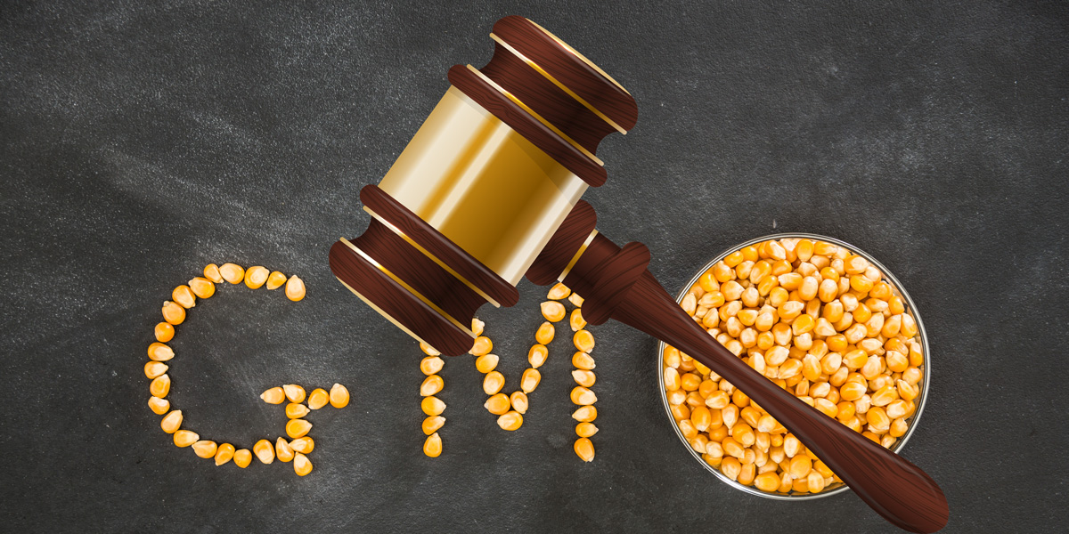 GMO Corn symbol Judges Gavel