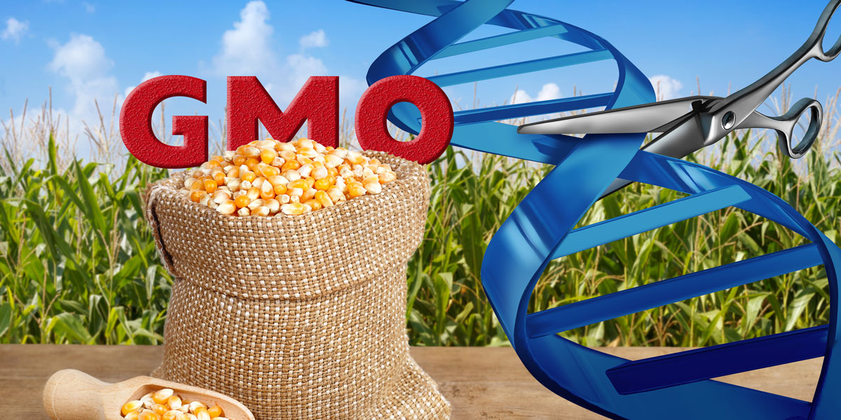 GMO Maize and Gene Editing
