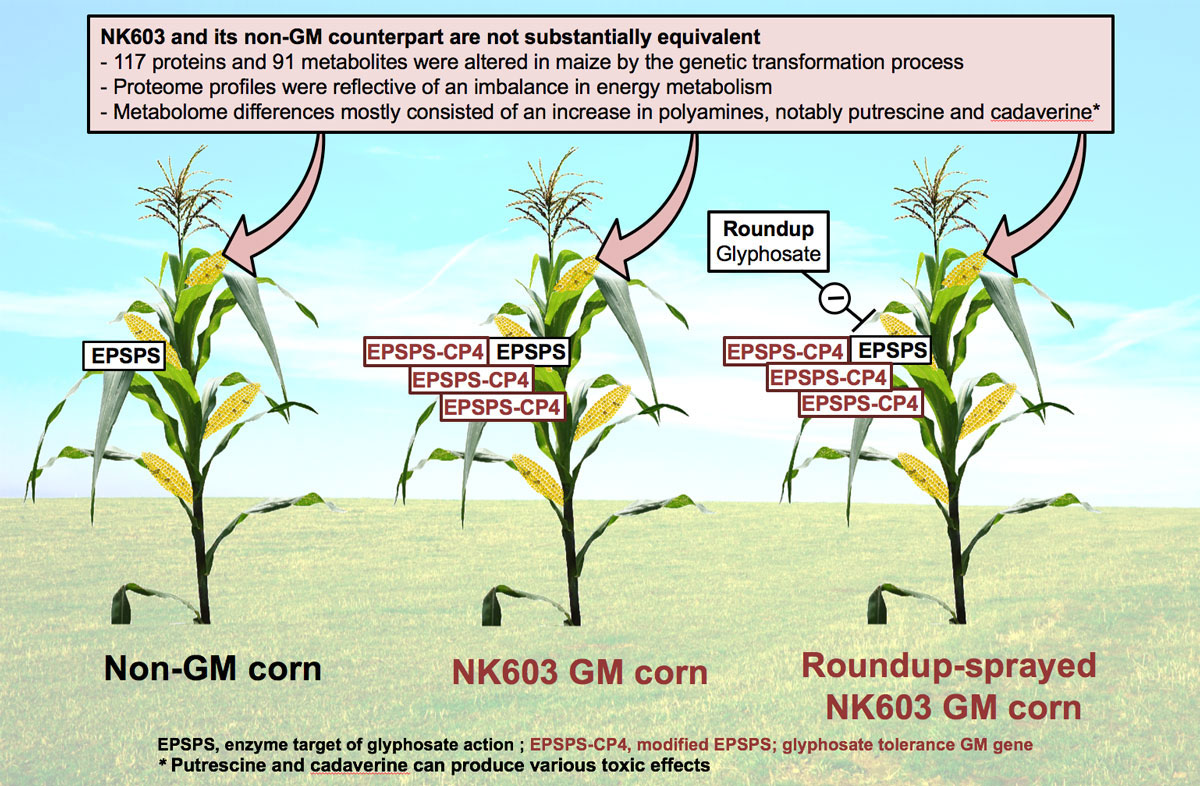 GMO maize NK603 is not substantially equivalent to its non-GMO counterpart