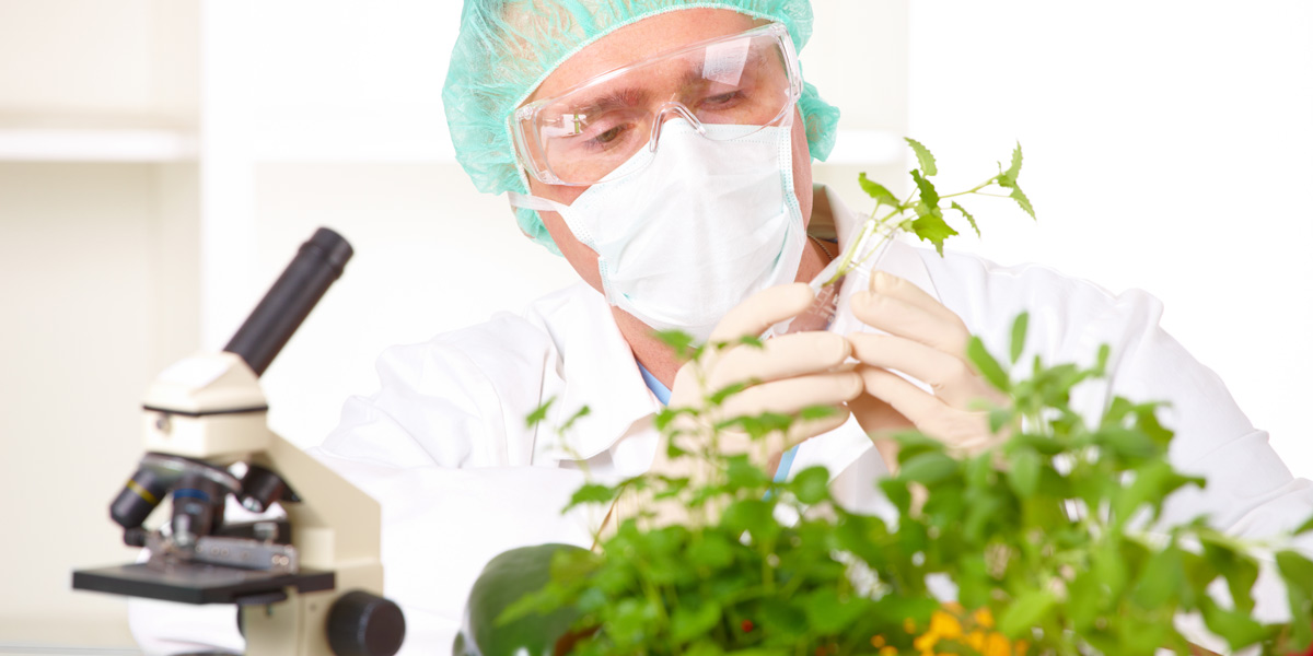 scientist and plant