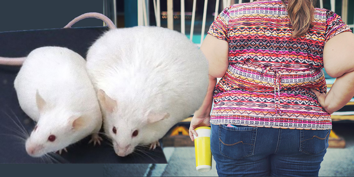 Thin and Fat Rats and Fat Woman