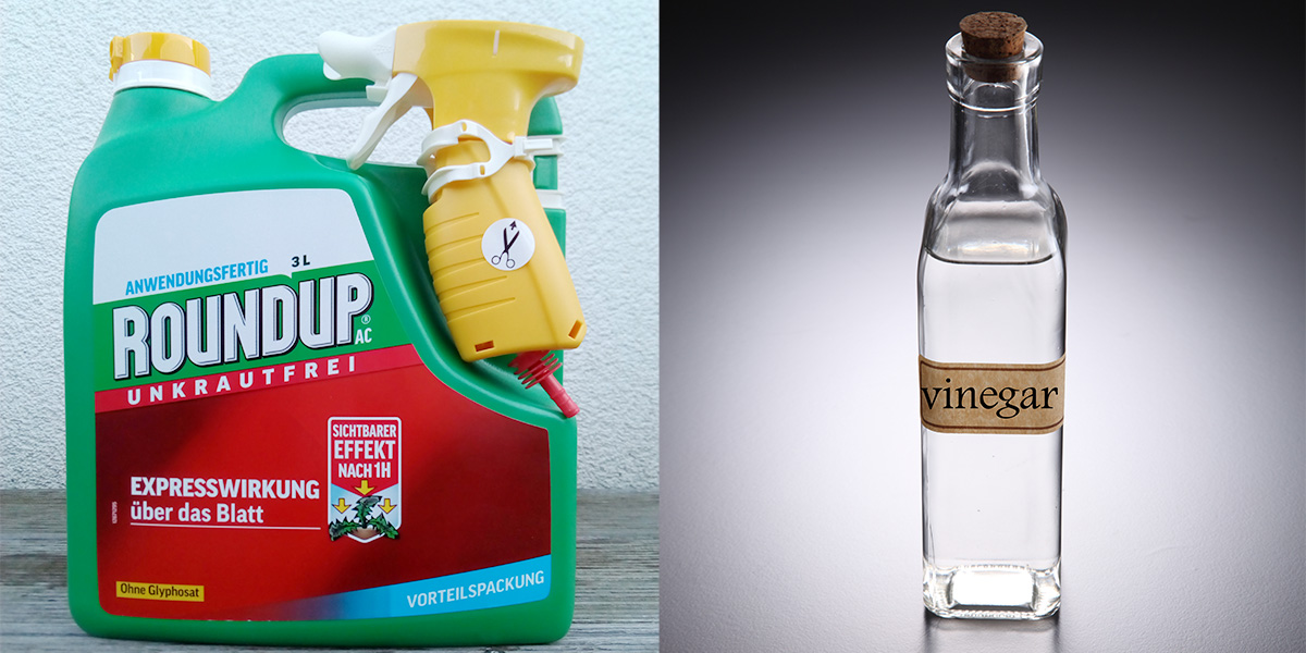 Vinegar bottle and Roundup container