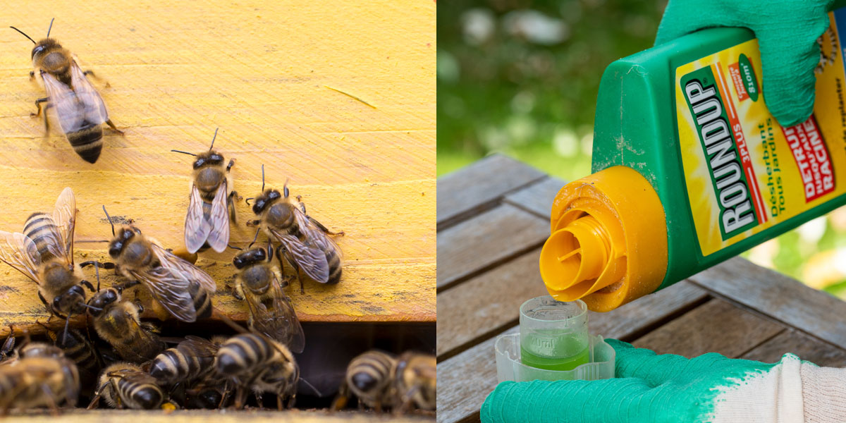 bees and roundup glyphosate