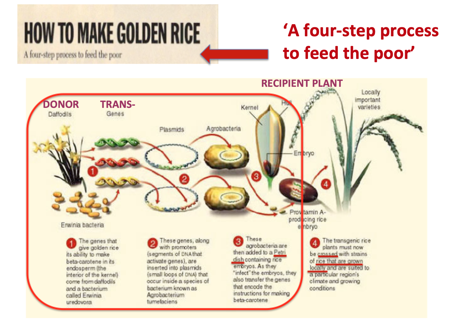 Four step process to feed poor