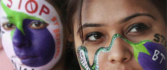 stop bt brinjal painted faces