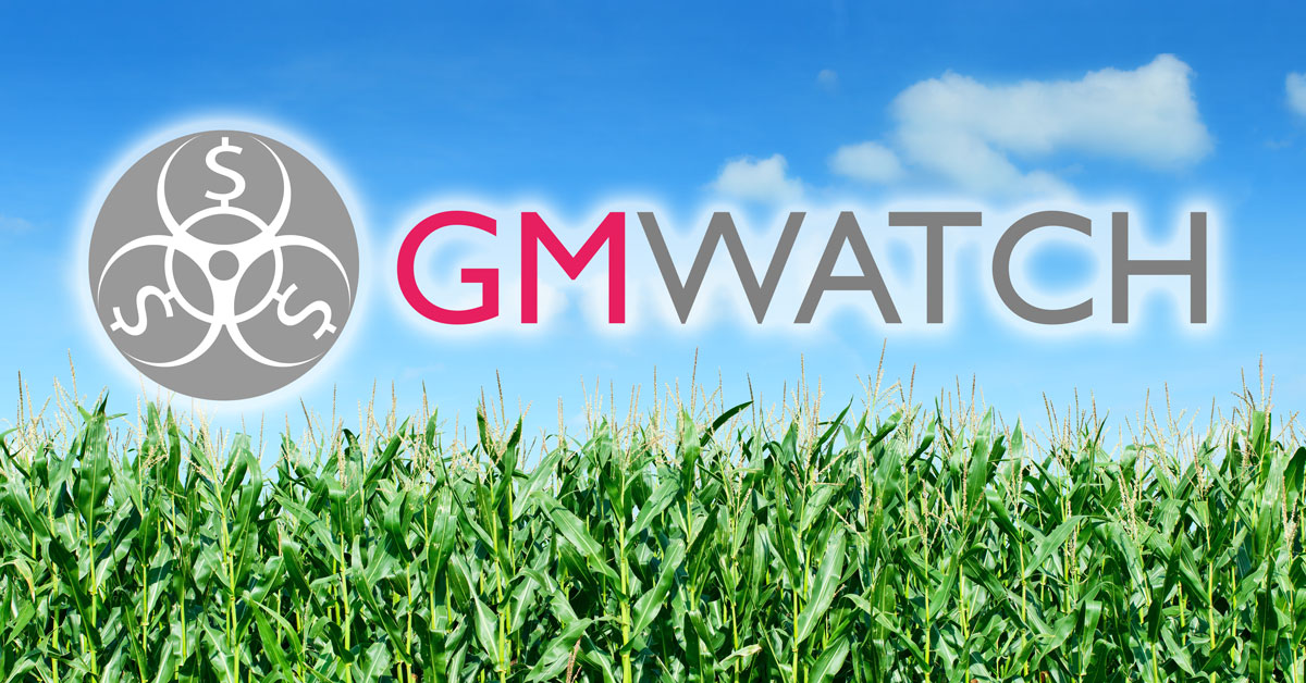 GMWatch Facebook cornfield banner