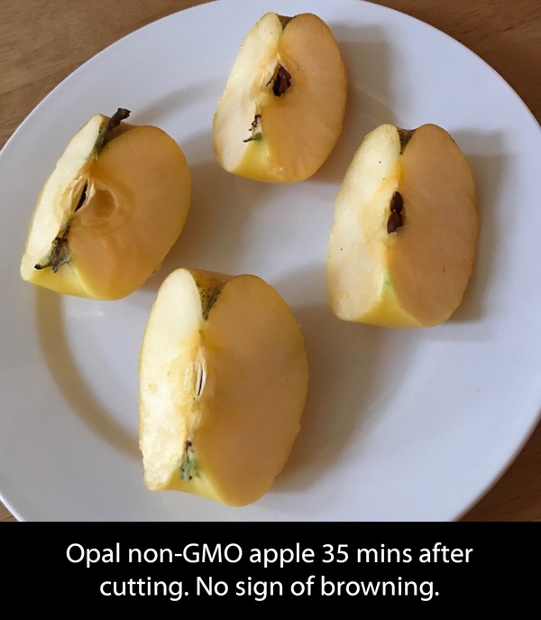 Opal non-gmo non-browning apple 35mins after cutting